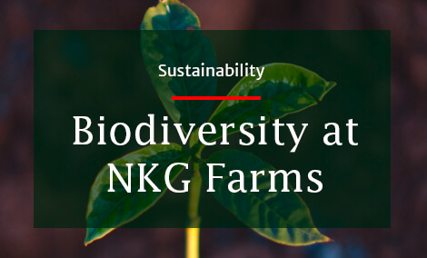 Our sister company NKG Tropical Farm Management recently published a concept note on biodiversity preservation and enhancement concerning NKG´s coffee farms Finca La Puebla in Mexico, Kaweri Coffee Plantation in Uganda and Fazenda da Lagoa in Brazil…