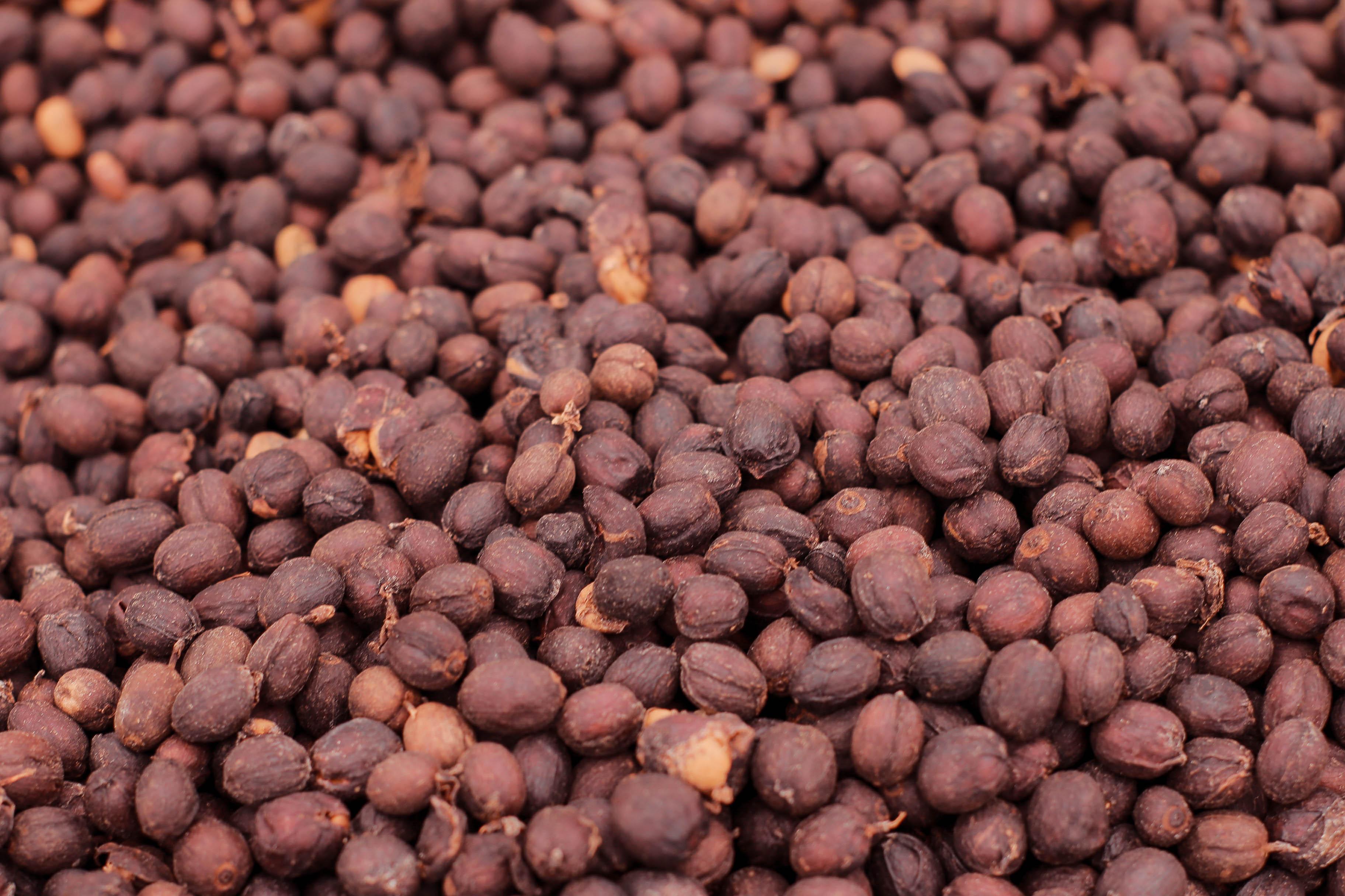 Bourboun Coffees - Araponga 0820-395