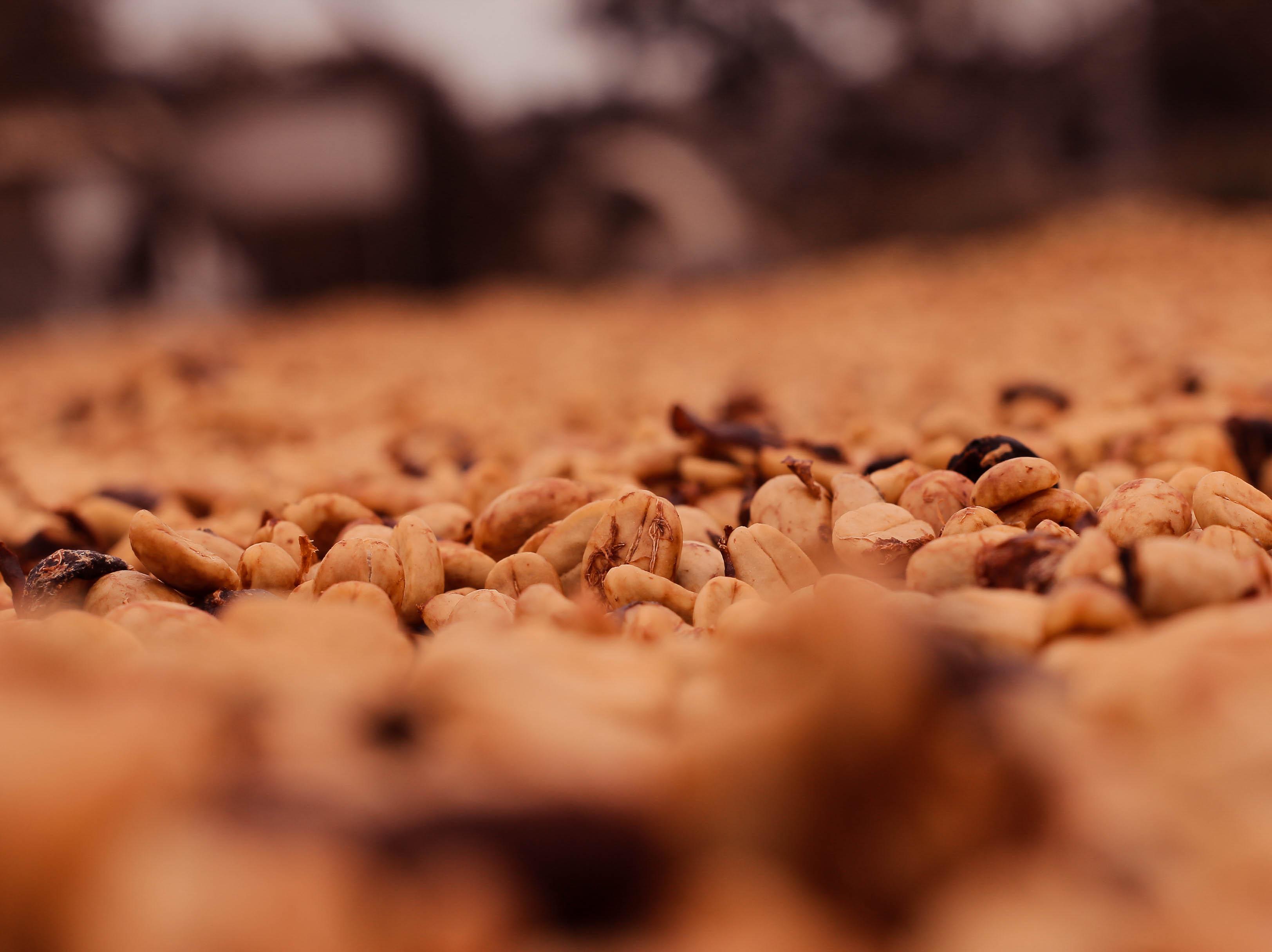 Bourboun Coffees - Araponga 0820-416