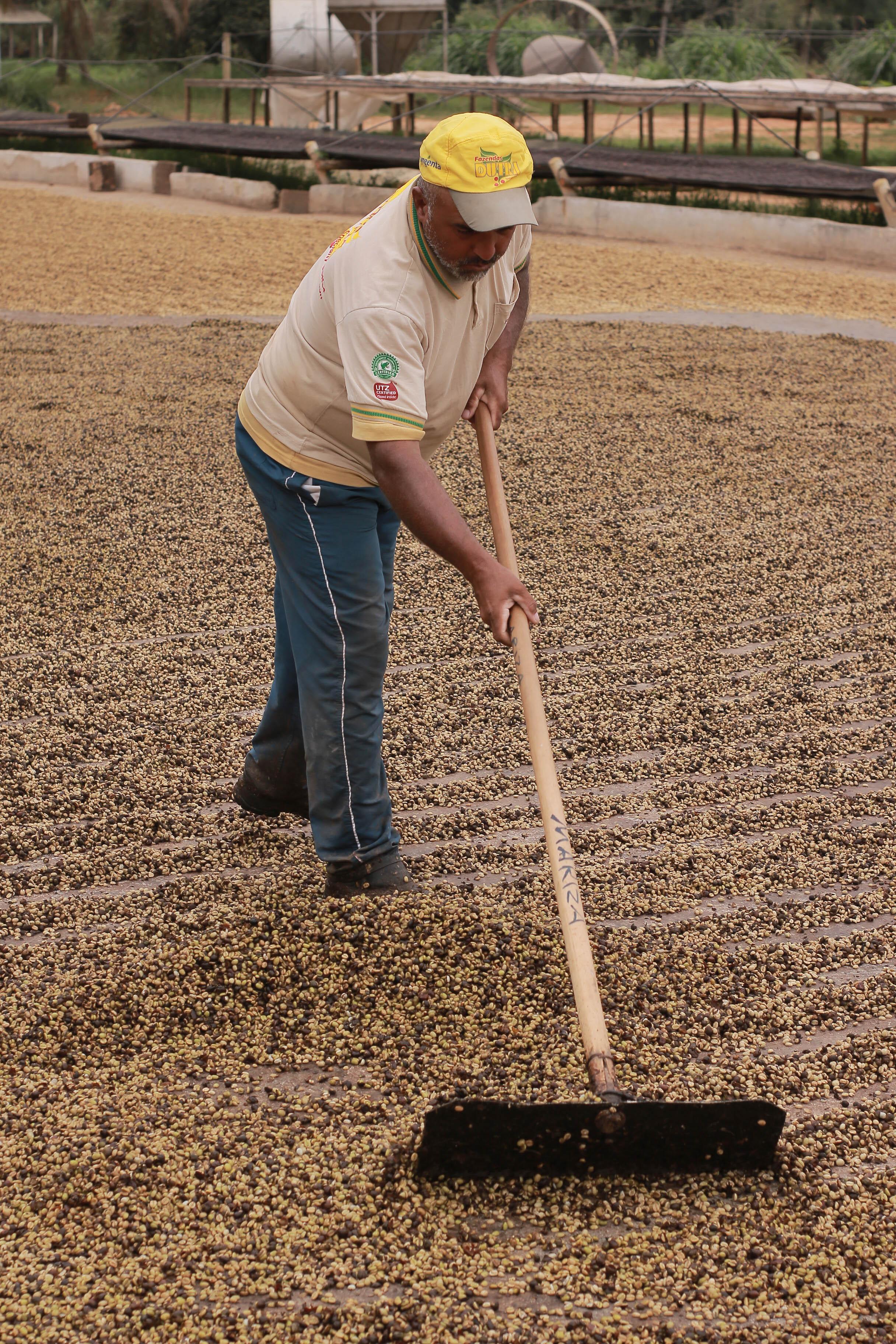 Bourboun Coffees - Araponga 0820-446
