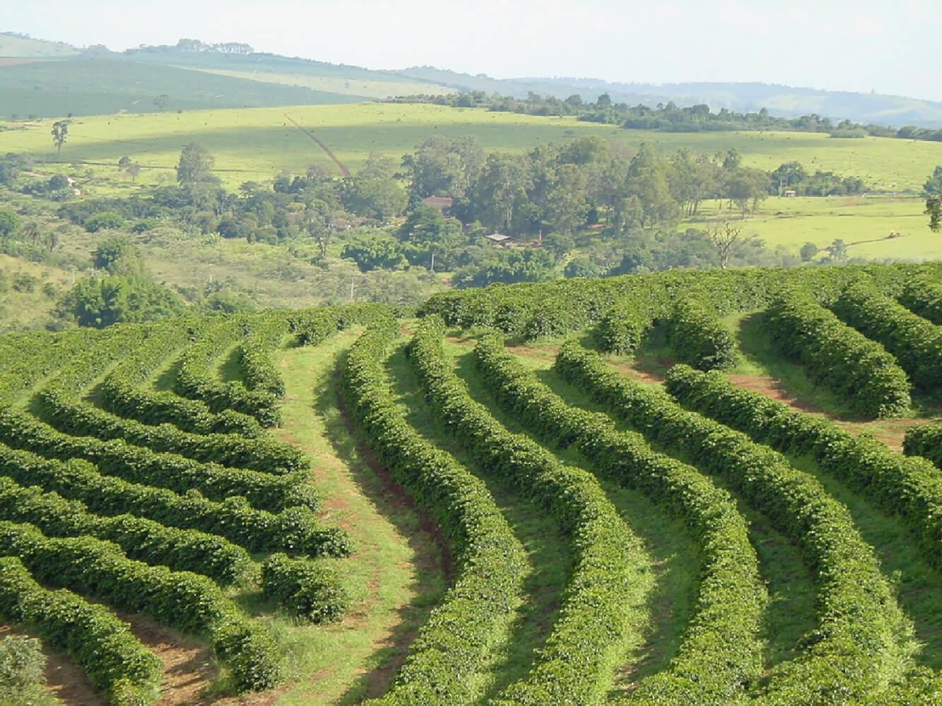 Brazil-Fazenda da Lagoa