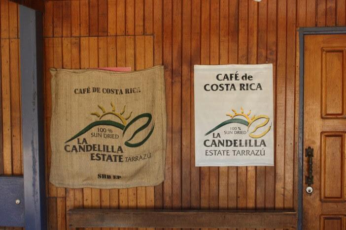 Candelilla_Typica_1
