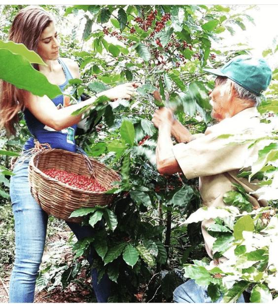 El Salvador-Palin Estate-2