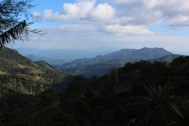 Honduras-Guara-Verde-02