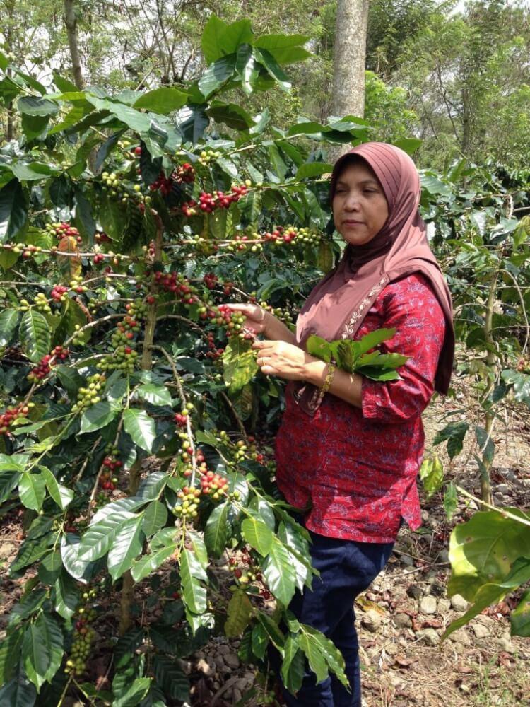 Indonesia-Ratu-Ketiara-Gayo-02