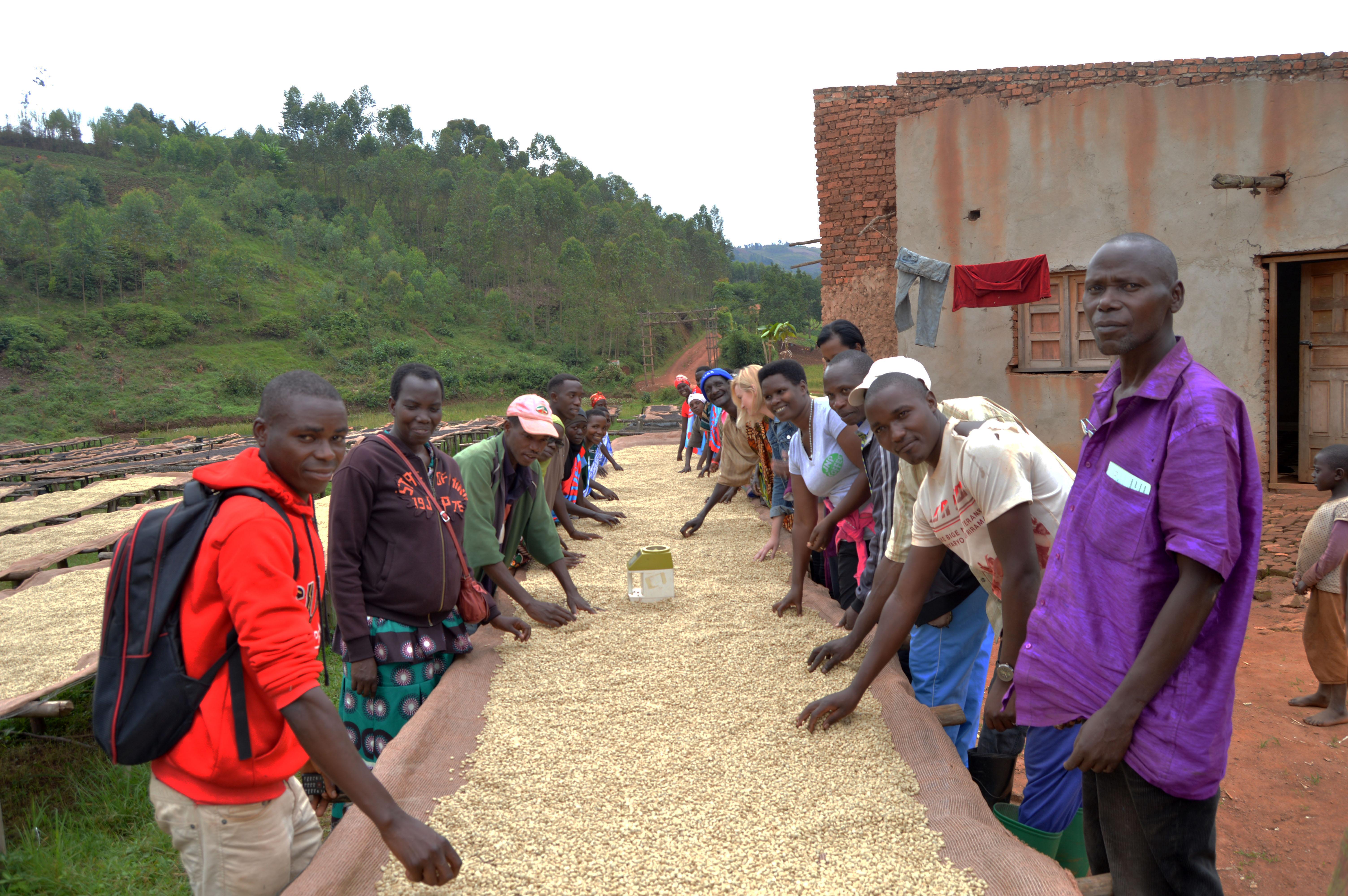 JNP-coffees-Burundi-Microlots-1