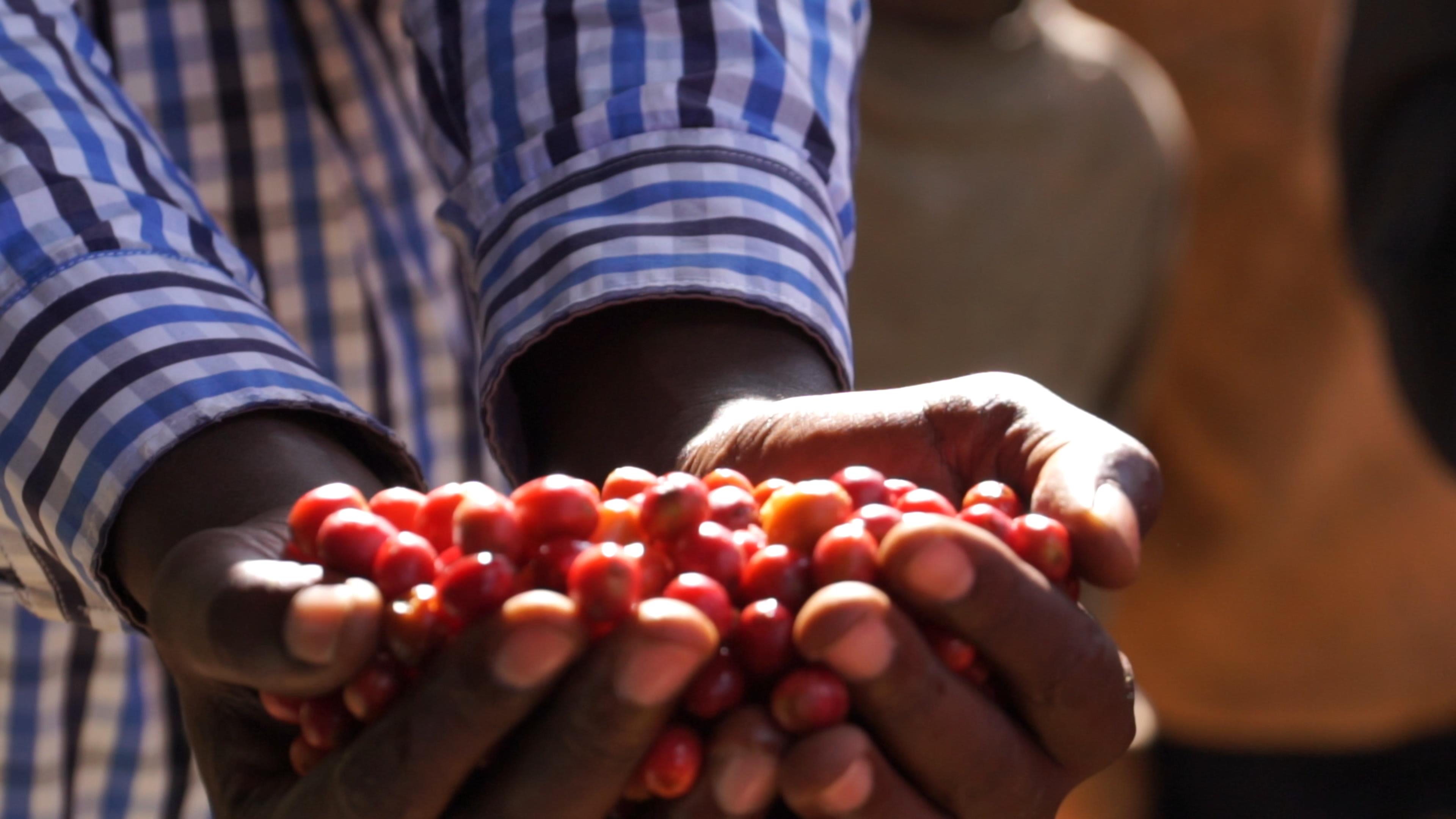 JNP-coffees-Burundi-Microlots-11