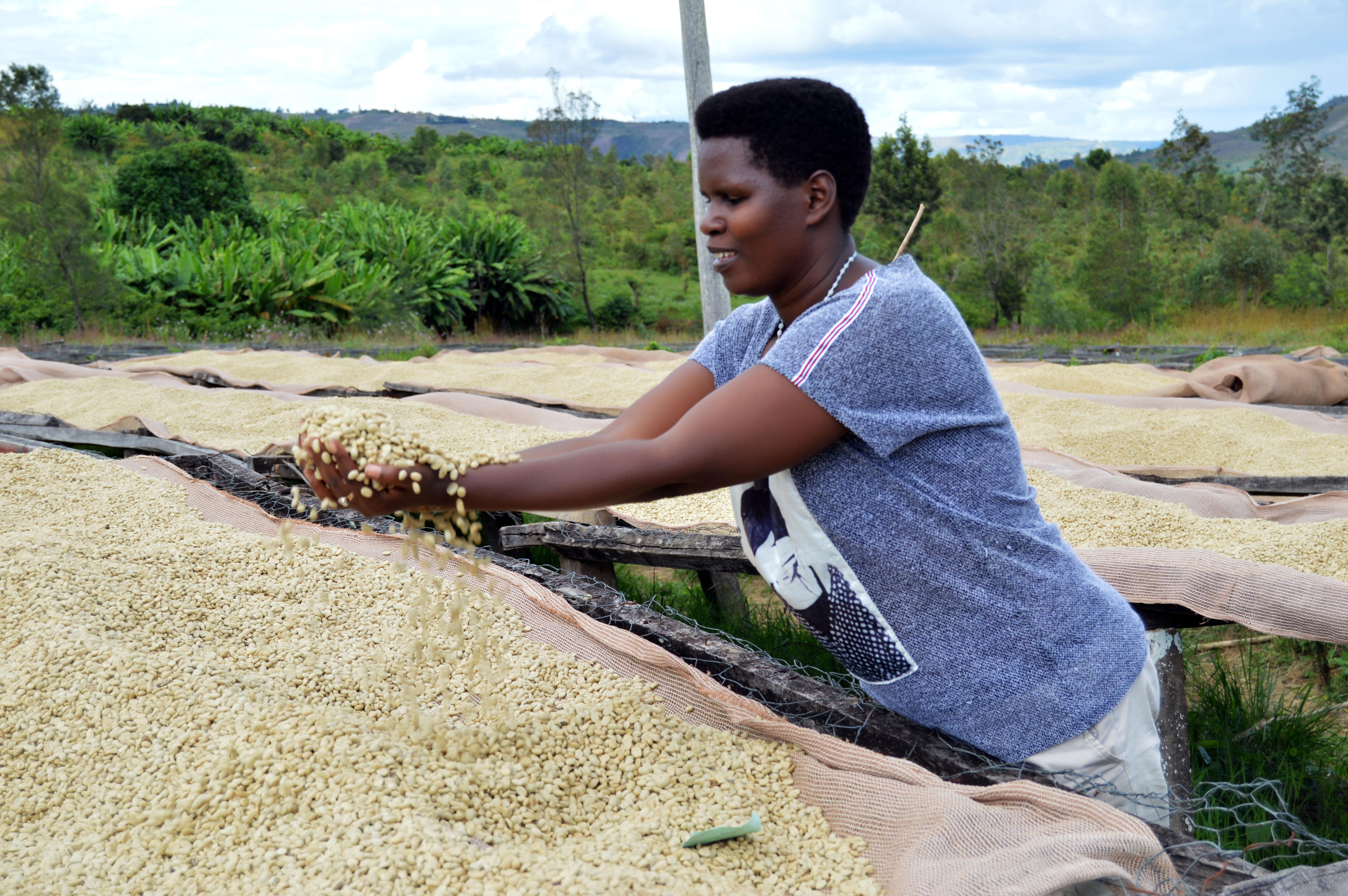 JNP-coffees-Burundi-Microlots-12