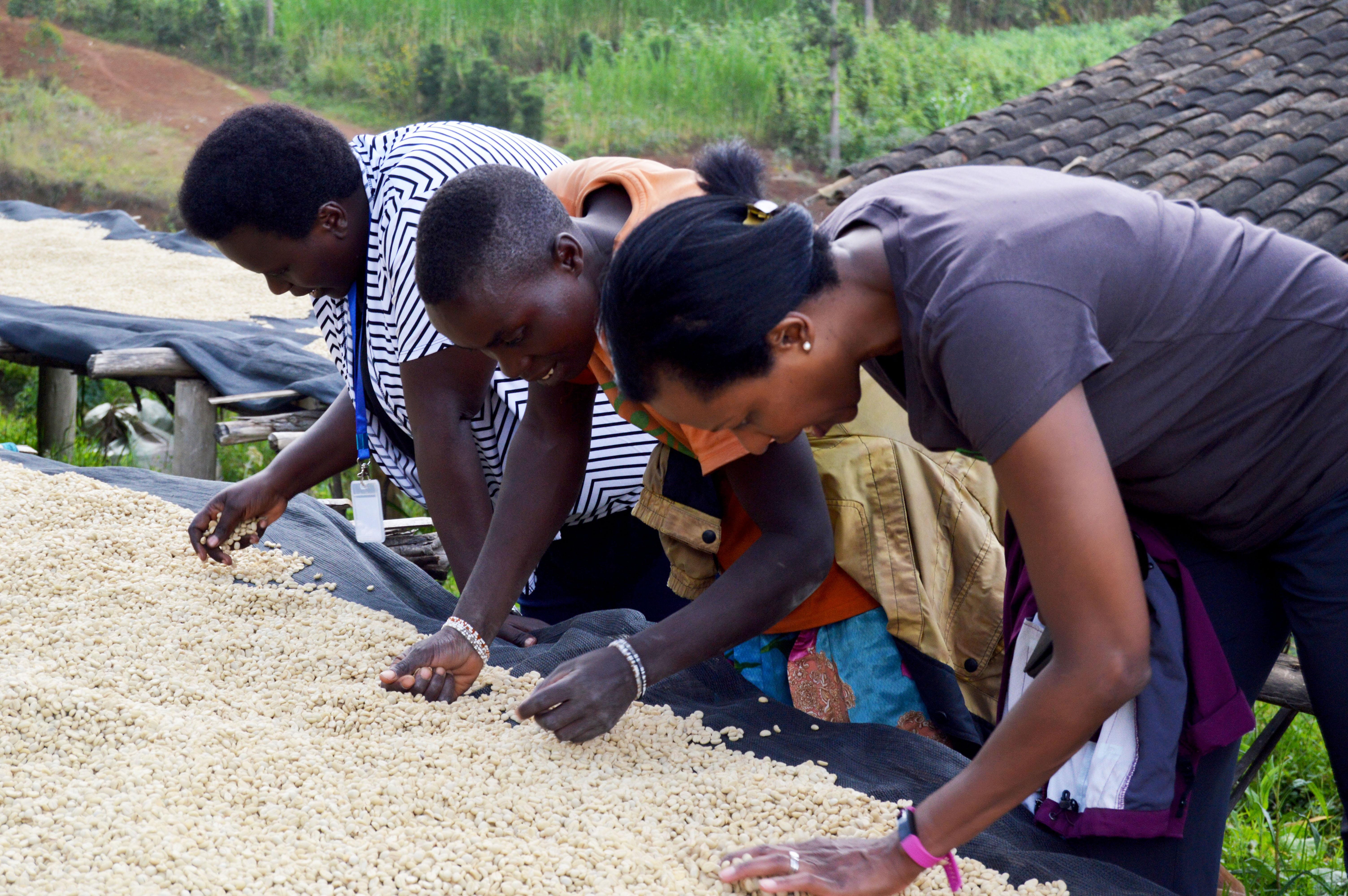 JNP-coffees-Burundi-Microlots-2
