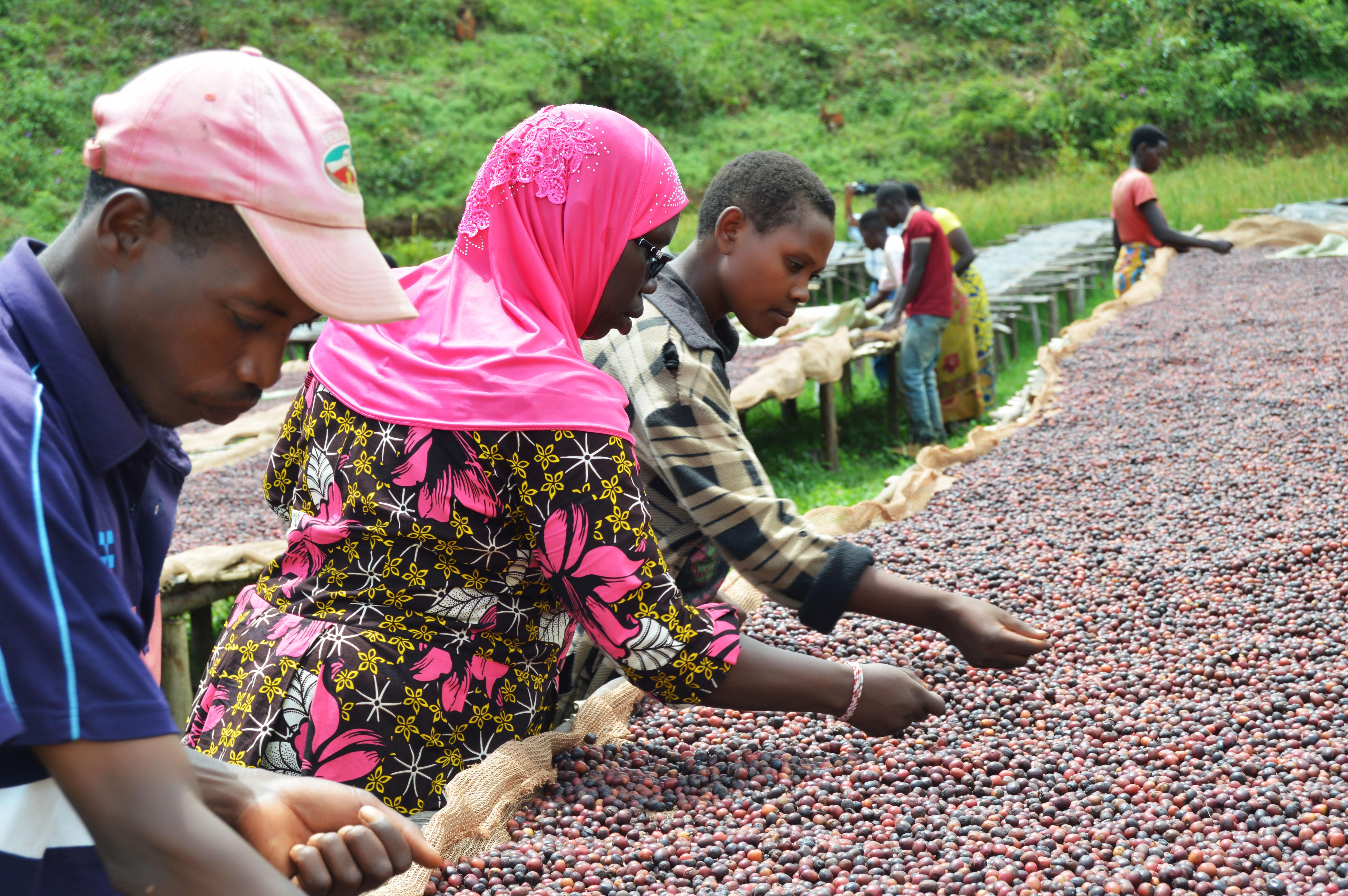 JNP-coffees-Burundi-Microlots-8