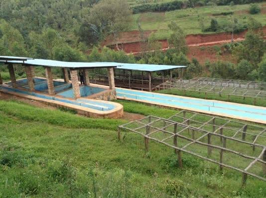 Nyakibanda