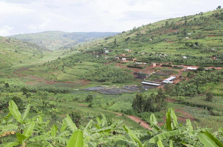 Rwanda Nova Cafe des Mamas 3