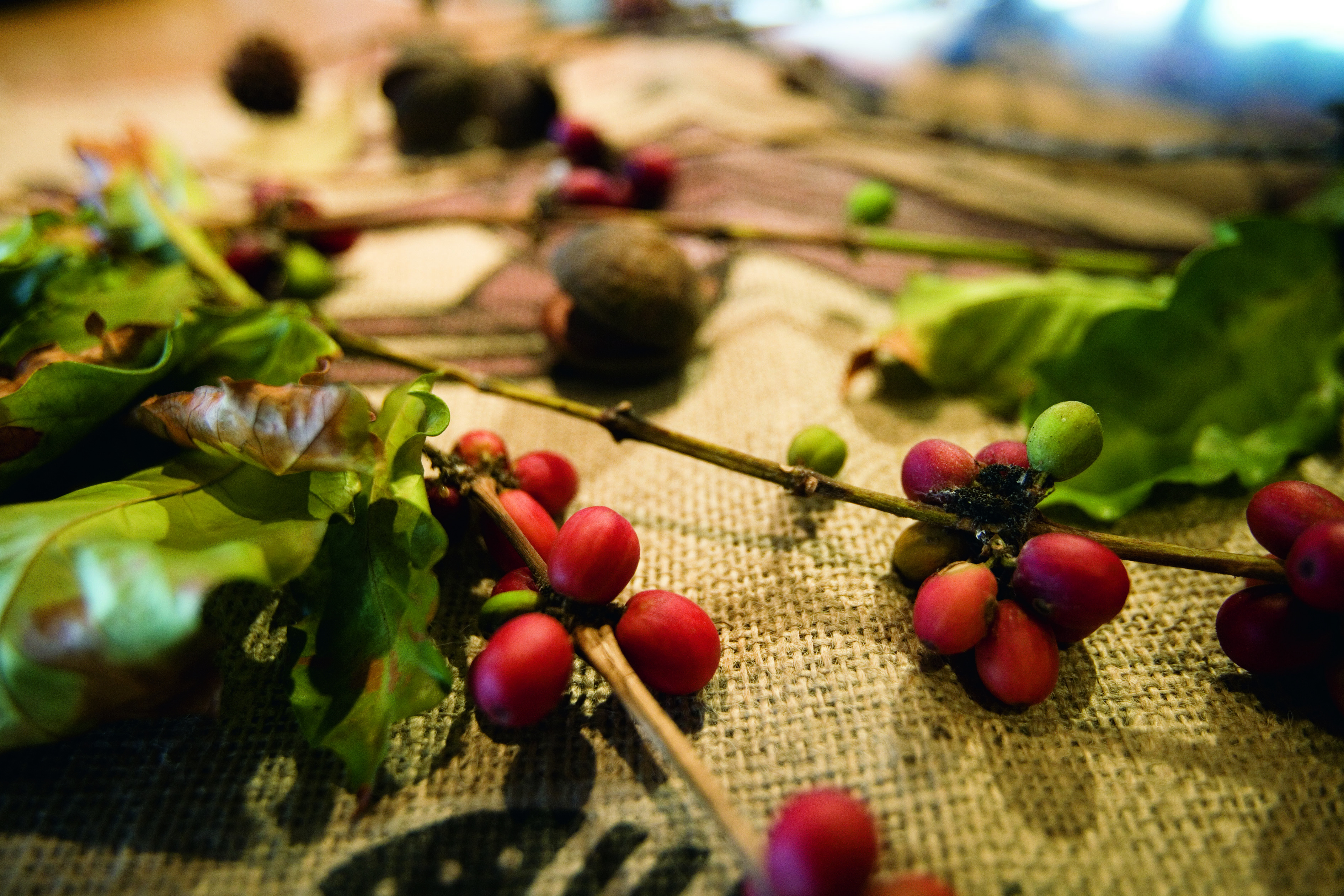 Skybury's Australian Coffee