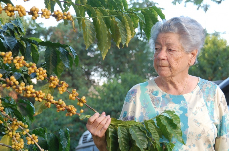 brazil-fazenda-sertao-yellow-bourbon-pb-natural-02