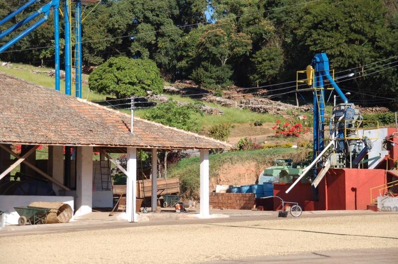 brazil-fazenda-sertao-yellow-bourbon-pb-natural-05