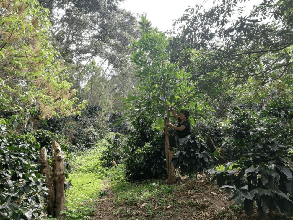 fincalaaurora-1