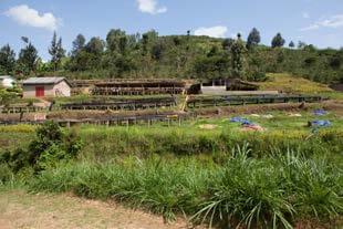 gahizi farm-1