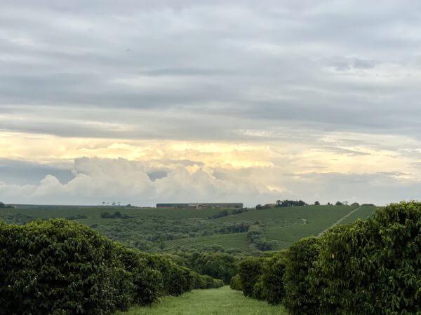 lagoa-view